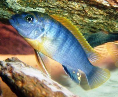 Ribnjak mjesto za pronalazak riba